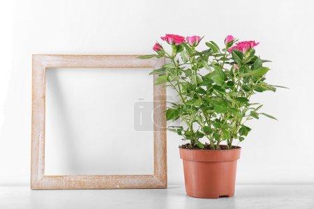 Розы в кастрюле и рамке