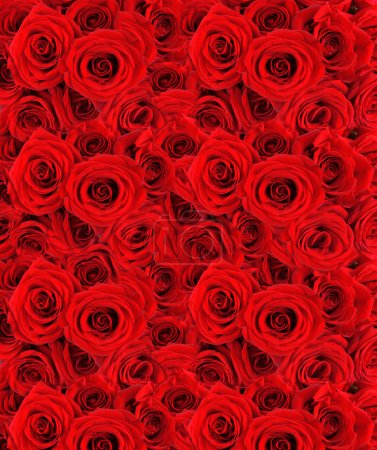 Beautiful red roses background