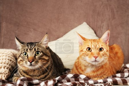 Two cats on blanket