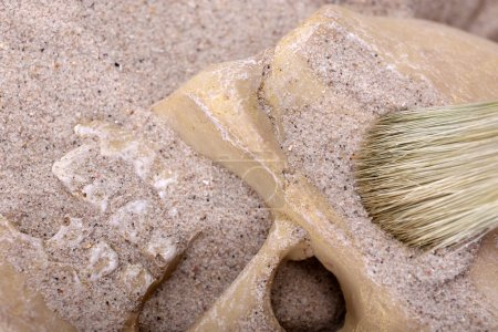 Human skull in sand and brush closeup...