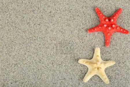 Starfish on sand background...