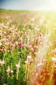 """Постер, картина, фотообои """"Полевые цветы в поле"""""""