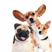 Funny psi izolovaných na bílém