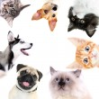 Collage of cute dogs and cats isolated on white...