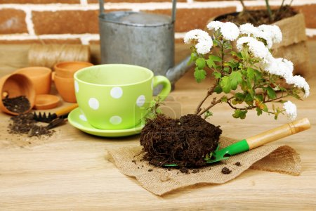 Flowers in pot and potting soil