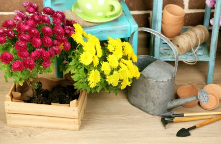 Flowers in pot on chair
