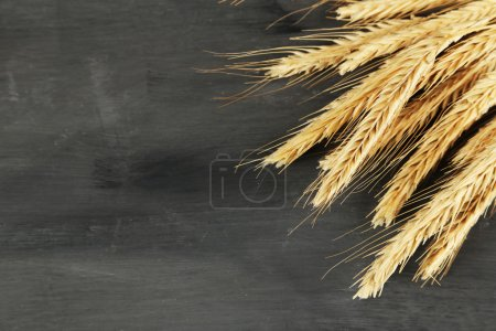 Spikelets of wheat on dark