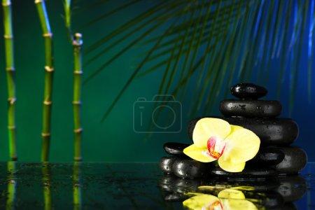 Photo pour Fleur d'orchidée avec des gouttes d'eau et galets pierres sur fond coloré foncé - image libre de droit