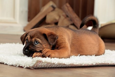 Cute puppy lying on carpet