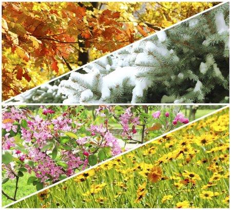 Photo pour Collage quatre saisons : hiver, printemps, été, automne - image libre de droit