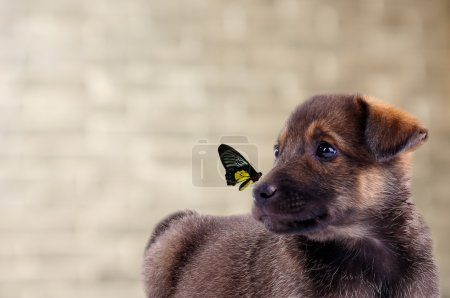 Colorful butterfly sitting on puppy's nose on brick wall background