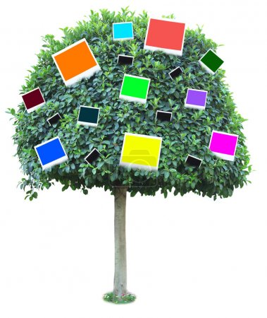 Big green tree with color photo cards on it isolated on white