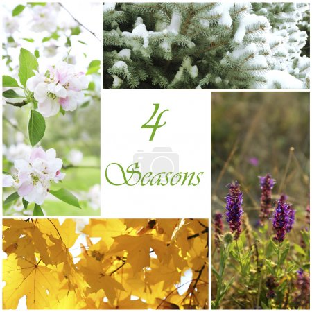 Four seasons collage with space for text: winter, spring, summer, autumn