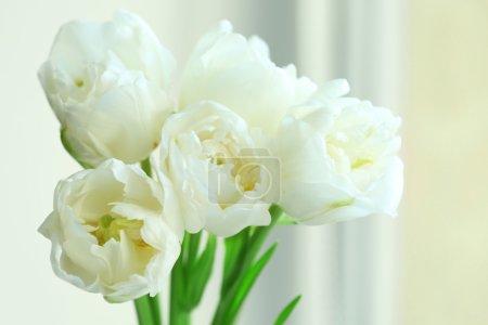 Beautiful white tulips, closeup
