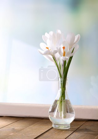 White crocus in vase on windowsill background
