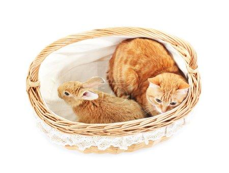 Photo pour Chat rouge et lapin dans un panier en osier isolé sur blanc - image libre de droit