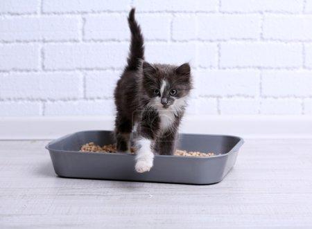 Small gray kitten in plastic litter cat