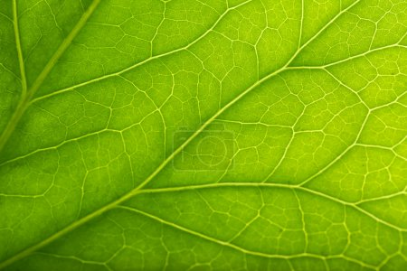 Tree green leaf close up