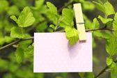 Prázdná karta visí na stromě