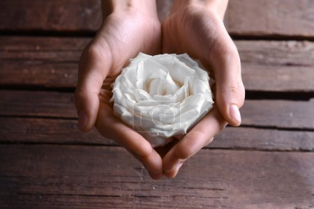 Bud of beautiful white rose in female hands, closeup