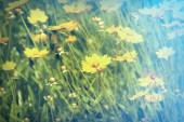 Cosmos flowers with sunlight