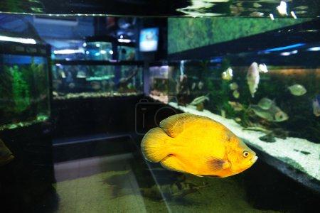 Underwater world - exotic fish in an aquarium...