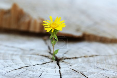 Foto de Hermosa plántulas de flores creciendo en el tronco central como un concepto de nueva vida - Imagen libre de derechos