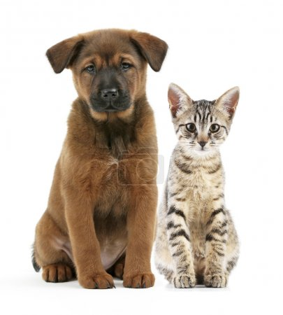 Cute pets isolated
