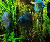 Exotické ryby v akváriu