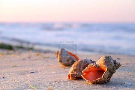 Beautiful seashells on the beach