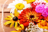 Fresh colorful flowers