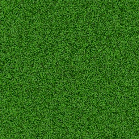 Soccer grass field