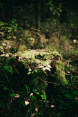 russian autumn forest, plants and flora close-up, beautiful landscape macro photography