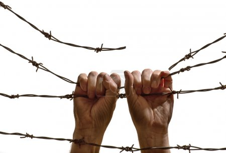 Photo for Hands hanging on the barbed wire on the white background - Royalty Free Image