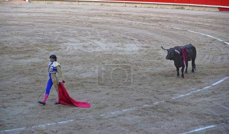 Spanish bullfighter and a bull in La Monumental arena