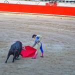 Постер, плакат: Spanish toreador teases the bull