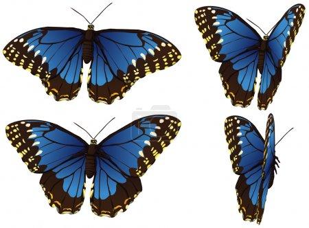 Illustration pour Motions cadres de Morpho papillon bleu sur blanc - image libre de droit