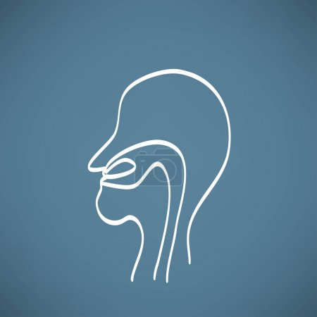 Human Nose anatomy