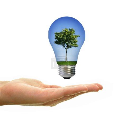 Photo pour Paysage d'arbre avec un ciel bleu et l'herbe à l'intérieur d'une ampoule au-dessus de la main - image libre de droit