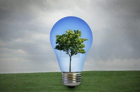 Photo pour Énergie écologique. arbre vert avec un ciel bleu à l'intérieur d'une ampoule avec gris tempête à l'extérieur - image libre de droit