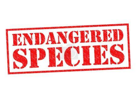 Photo pour Timbre en caoutchouc des espèces en péril rouge sur fond blanc. - image libre de droit