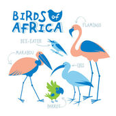 Set of african birds drawn in flat style