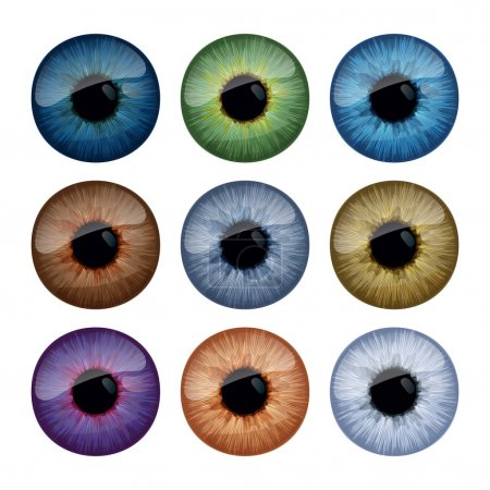 Set of human eyes iris