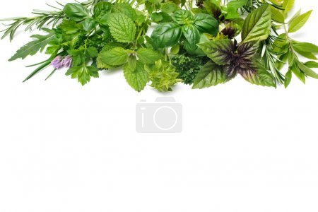 Photo for Fresh green herbs isolated over white background - Royalty Free Image