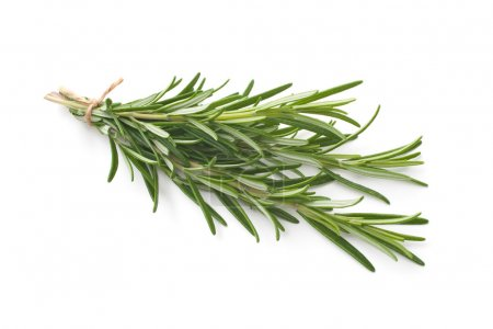 Photo for Fresh rosemary herb leaves isolated on white - Royalty Free Image
