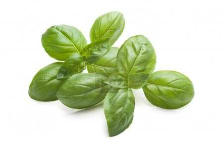 Photo for Closeup of fresh basil leaves isolated on white - Royalty Free Image