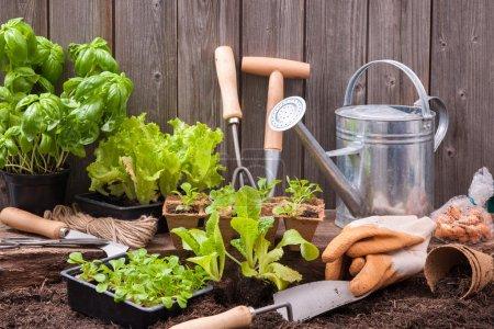 Photo pour Semis de laitue avec des outils de jardinage à l'extérieur du hangar de potting - image libre de droit