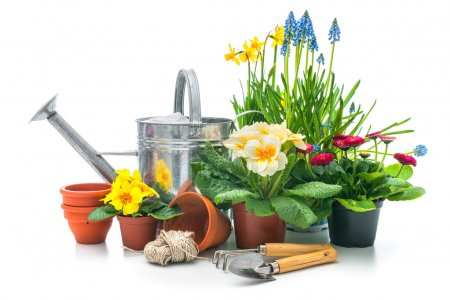 Spring flowers with gardening tools