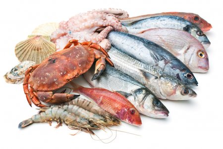 Photo for Fresh catch of fish and other seafood isolated on white background - Royalty Free Image