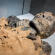 Egyptian mummy lying in museum...